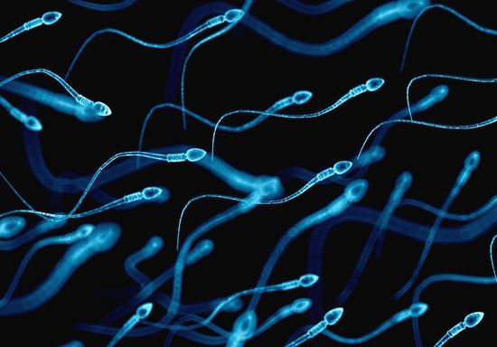 Male infertility treatment & semen analysis testing