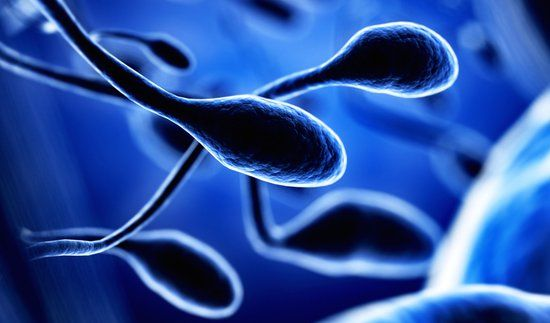 Record numbers of sperm donors at Manchester Fertility